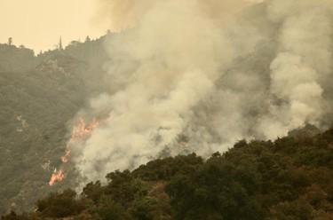美国多州山火持续肆虐 至少31人死亡
