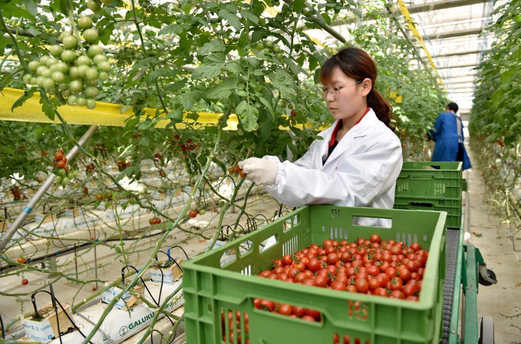 我国一季度农业农村经济形势总体向好