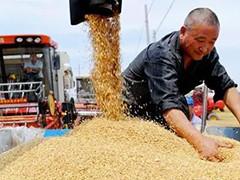 我国夏粮产量再创历史新高