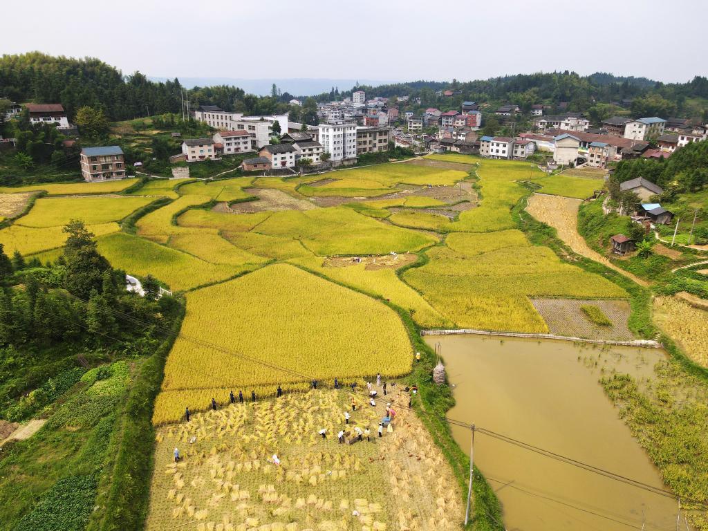 今天是第四个中国农民丰收节